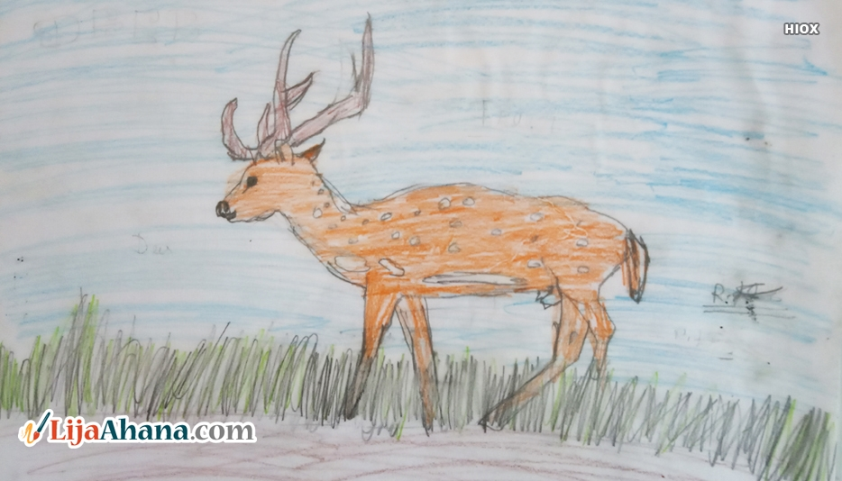 Deer Drawing With Colour