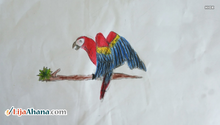 Flying Parrot Kid Pencil Drawing